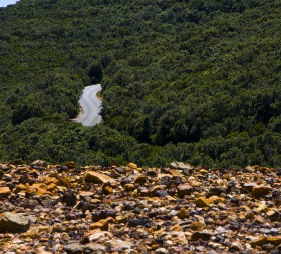 Boschi di Rio nell'Elba